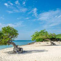 Aruba_538054543