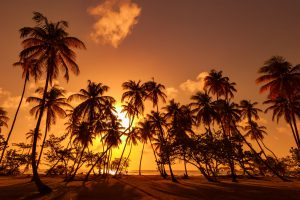 Tobago_601479623