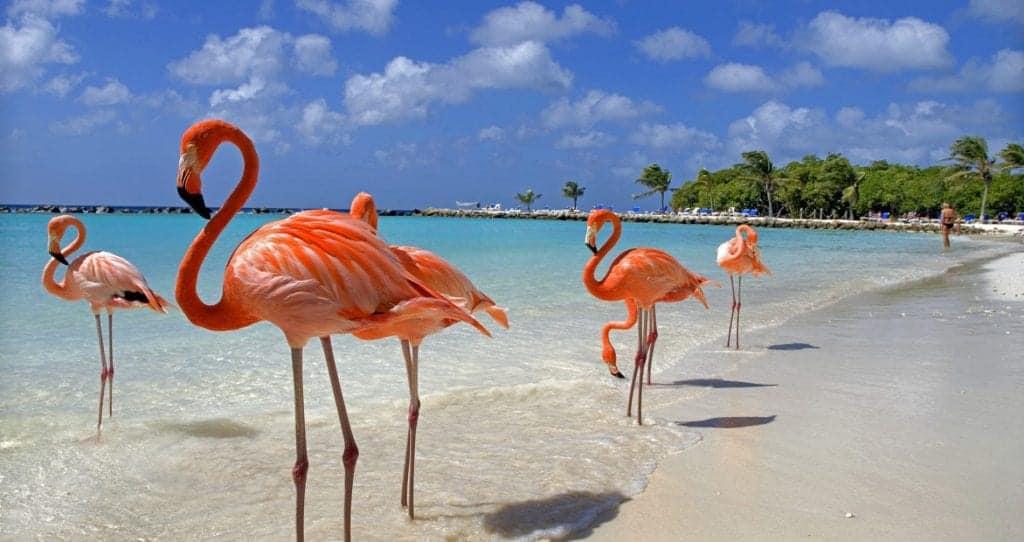Flamingos - Aruba holiday deals with SN Travel