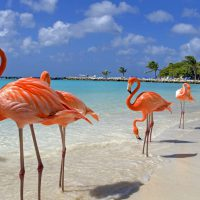 Flamingos - Aruba holiday deals with SN Travel