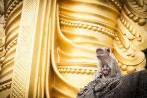 Mother holding baby monkeys of Batu Cave sitting at base of golden statue of Lord Muragan Hundiu shrine, Kuala Lumpur. (Mother holding baby monkeys of Batu Cave sitting at base of golden statue of Lord Muragan Hundiu shrine, Kuala Lumpur., ASCII, 119