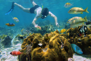 Snorkeler underwater looking a starfish in a shallow coral reef with tropical fish, Caribbean sea