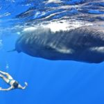 Swimming with whales on holiday in Dominica